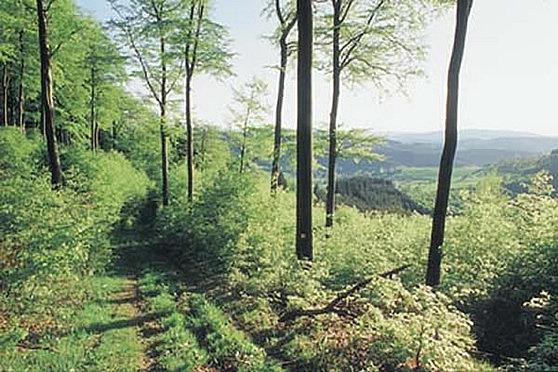 Wandern rund um´s Waldhaus