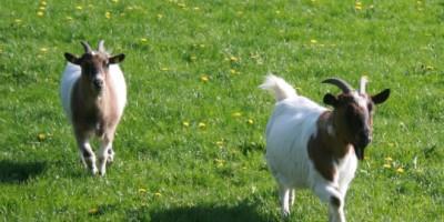Vierbeinige Bewohner auf dem Bauernhof