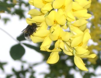 Fleissige Bienen liefern den gesunden Honig