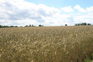 Landwirtschaft in Deutschland