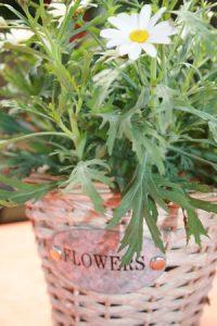 Flower Power - für Heuschnupfler ein Horror