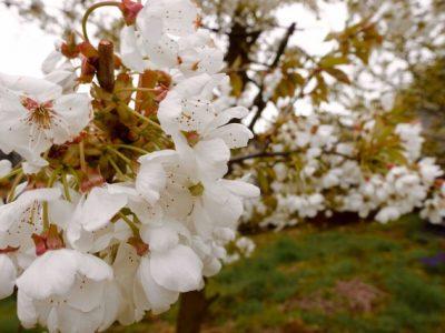 Bluetenweisse Waesche
