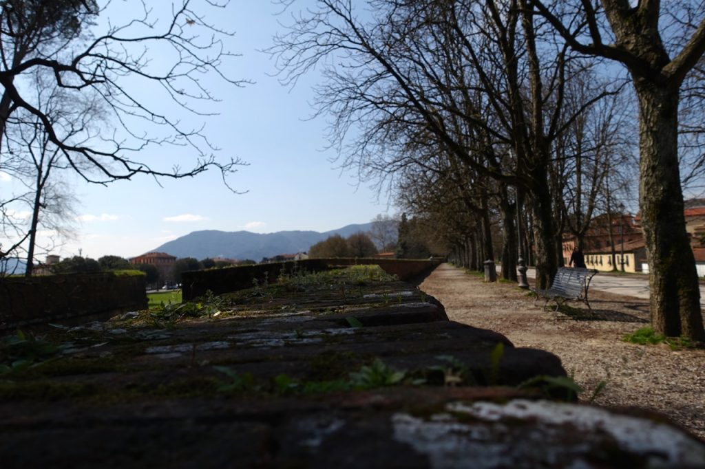 Urlaub in Lucca Toskana Spaziergang auf dem Stadtwall