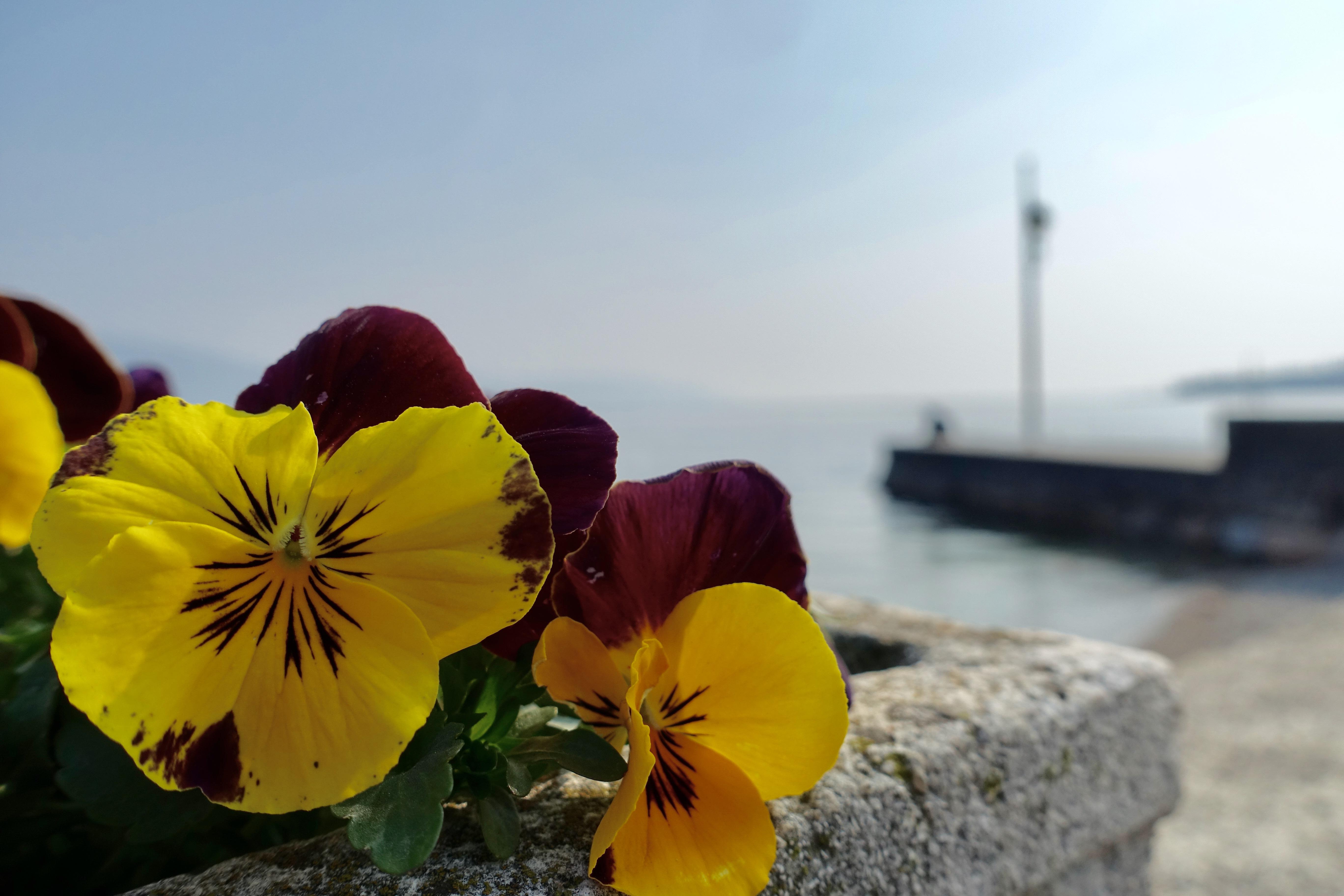 Gargnano Urlaubsort Gardasee Italien