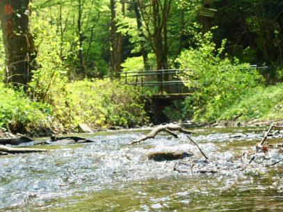 Wandern Brodenbach Mosel