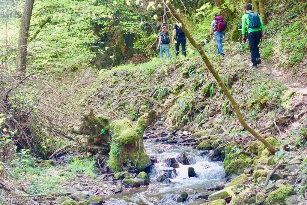 Brodenbach Mosel wandern - immer am Brodenbach entlang