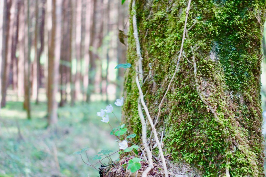 Mosel Urlaub Tipps - Wandern Donnerloch Brodenbach