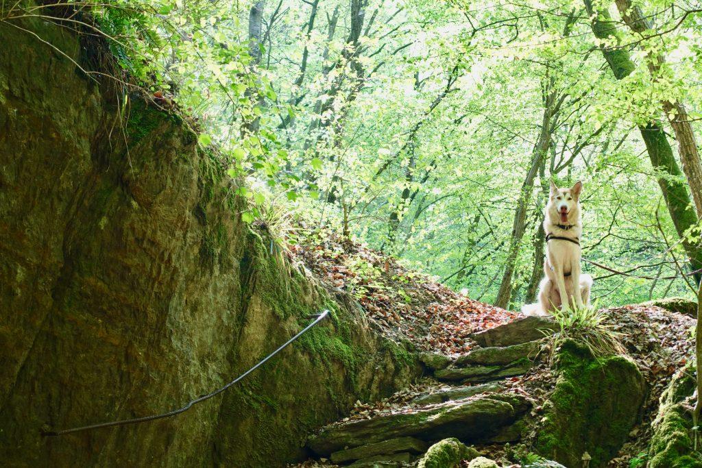 Mosel Urlaub Hund