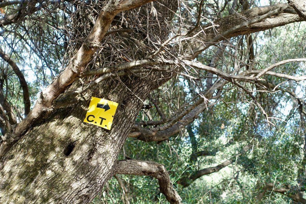Corfu Trail wandern