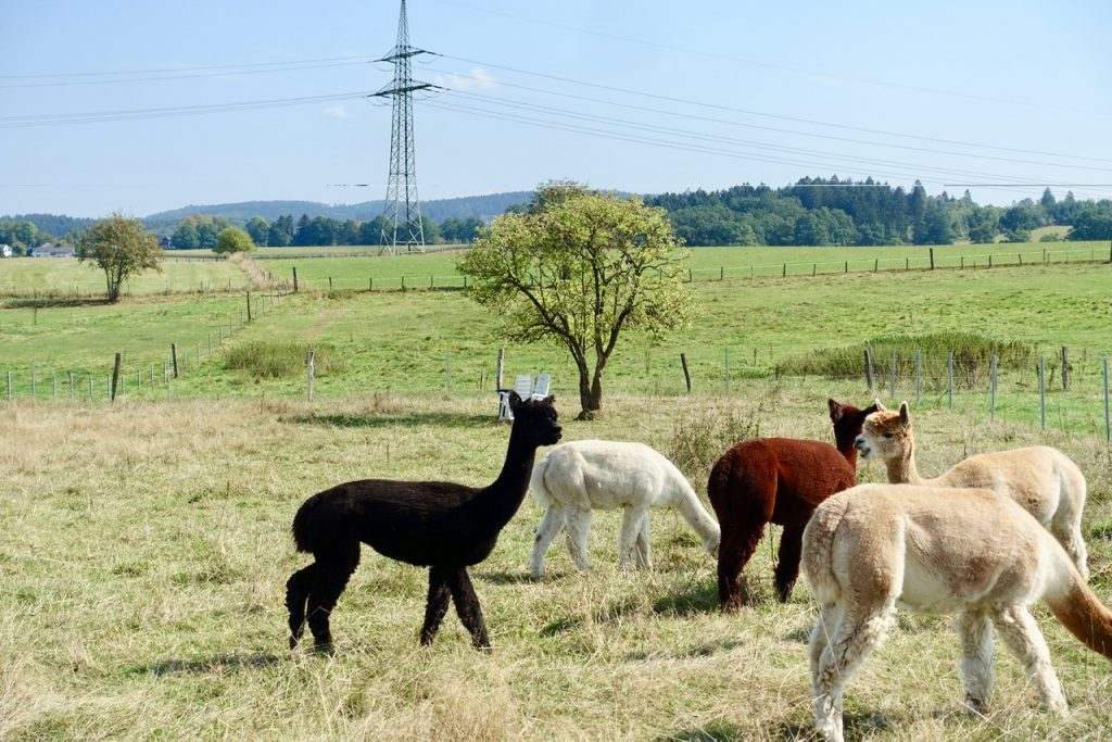 Alpaka Farm Sauerland