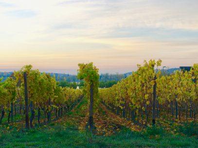 Wein, Wandern und Wellness Rheingau