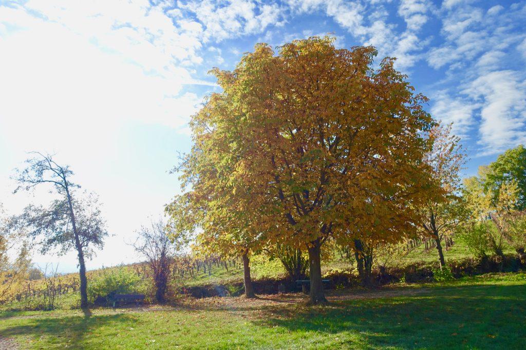 Durch die Weinberge im Rheingau