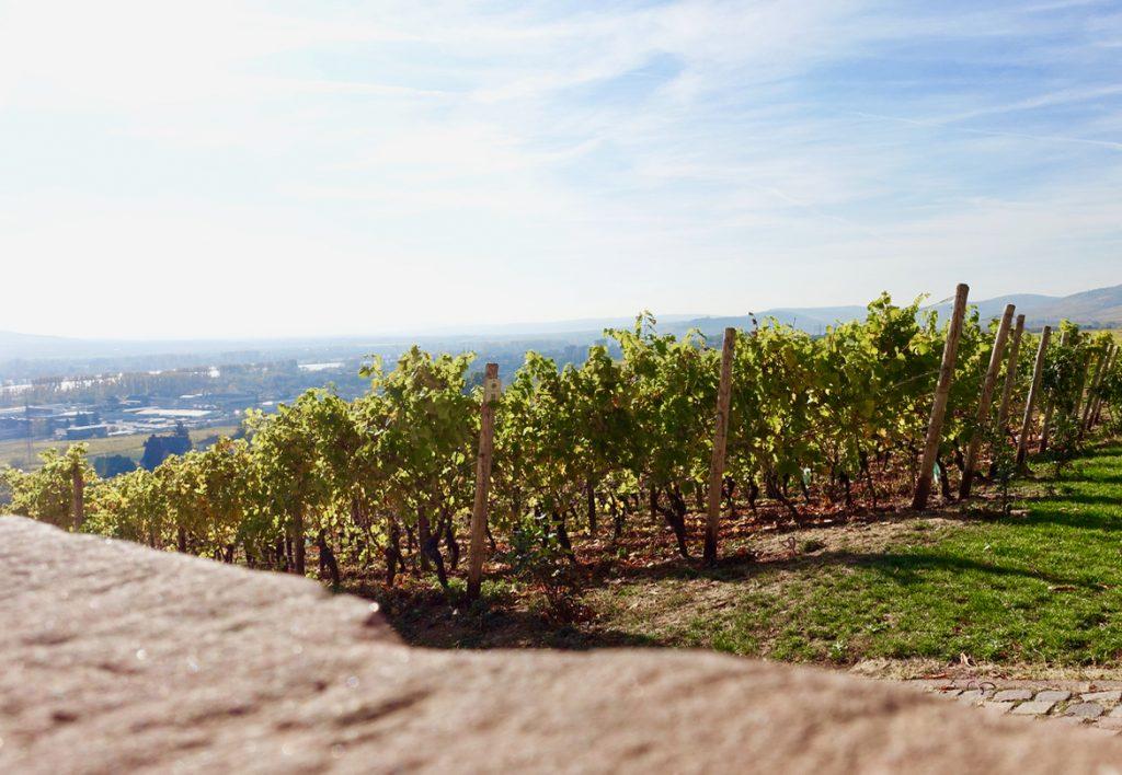 Ausblick vom Schloss Johannisberg Rheingau