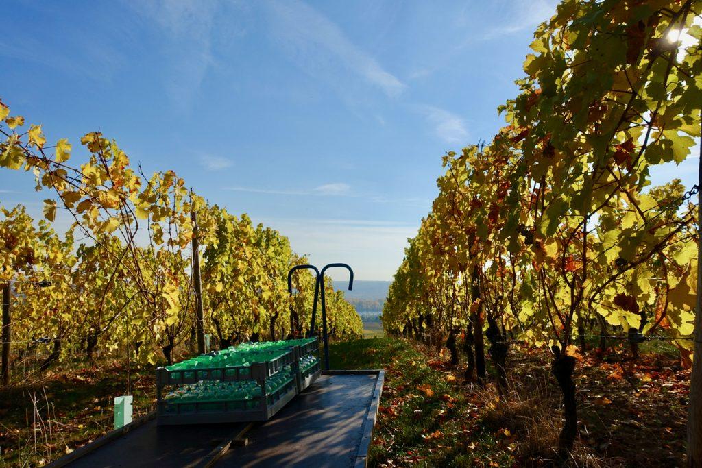 Wein im Rheingau