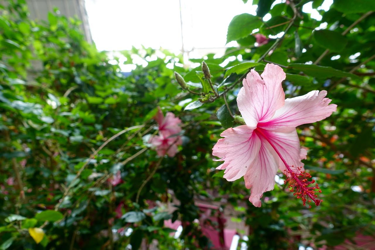 Tropical Islands – Streifzug durch den Indoorregenwald