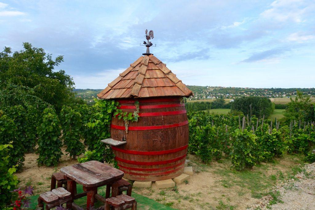 Weinberge am Balaton
