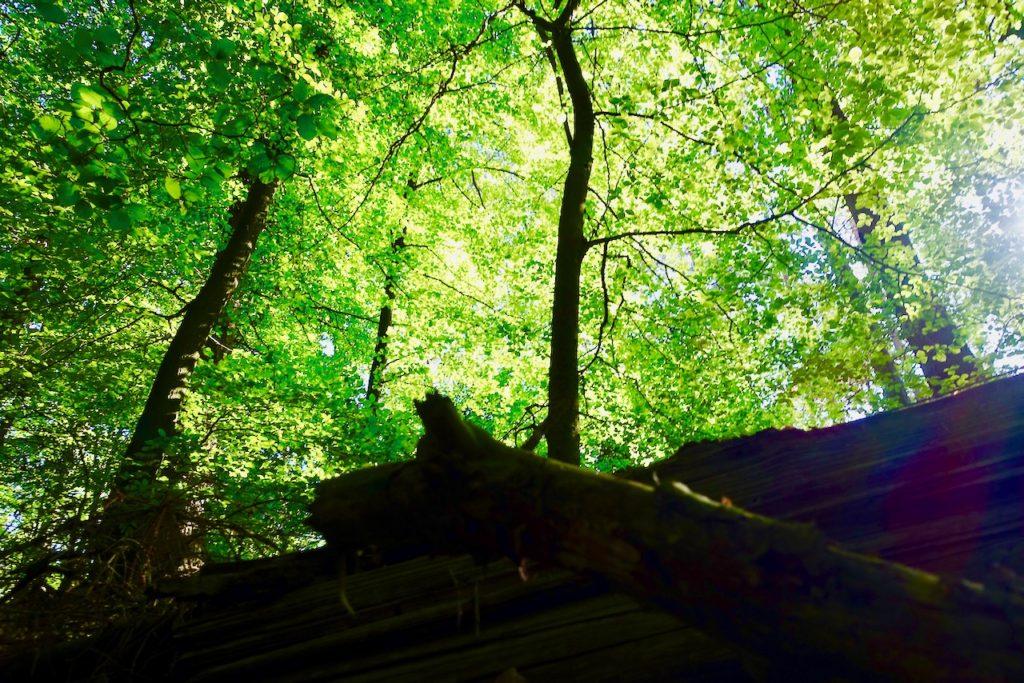 Hahnheide bei Trittau: Waldbaden