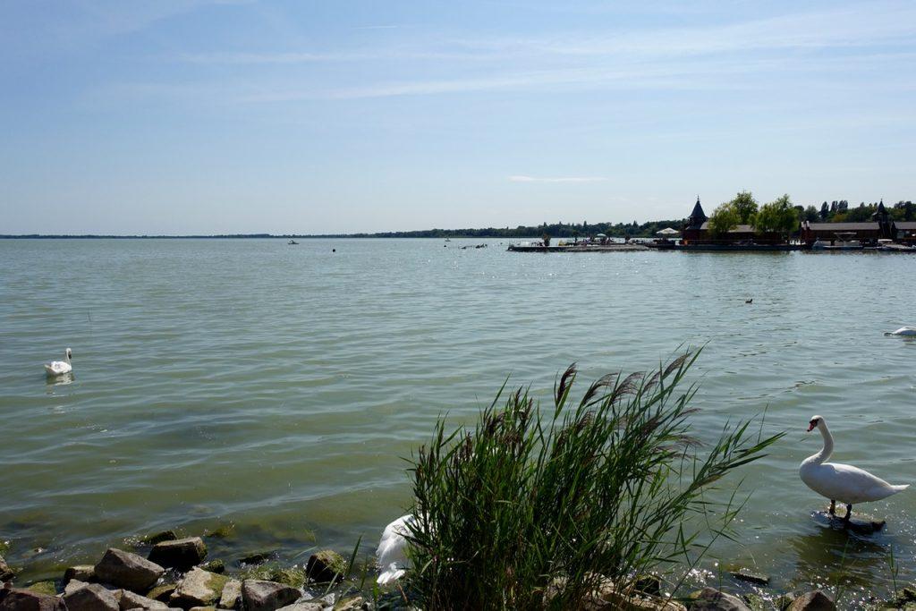 Am Ufer des Plattensee