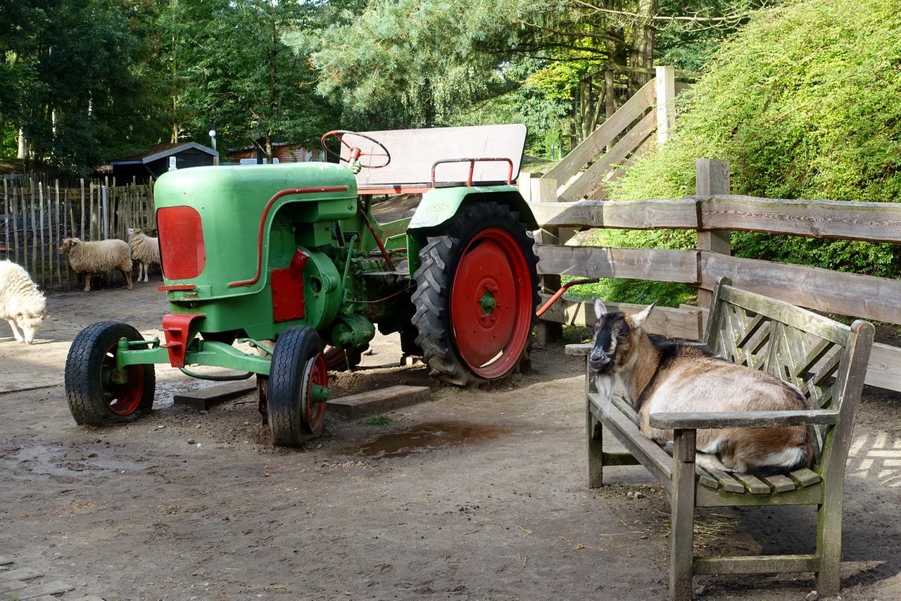 Streichelzoo und Kinderbauernhof im Center Parcs Bispinger Heide