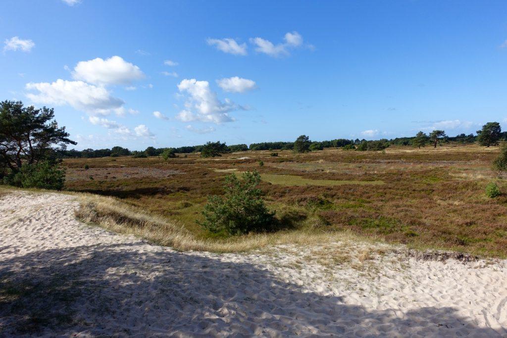 Hiddensee Heide