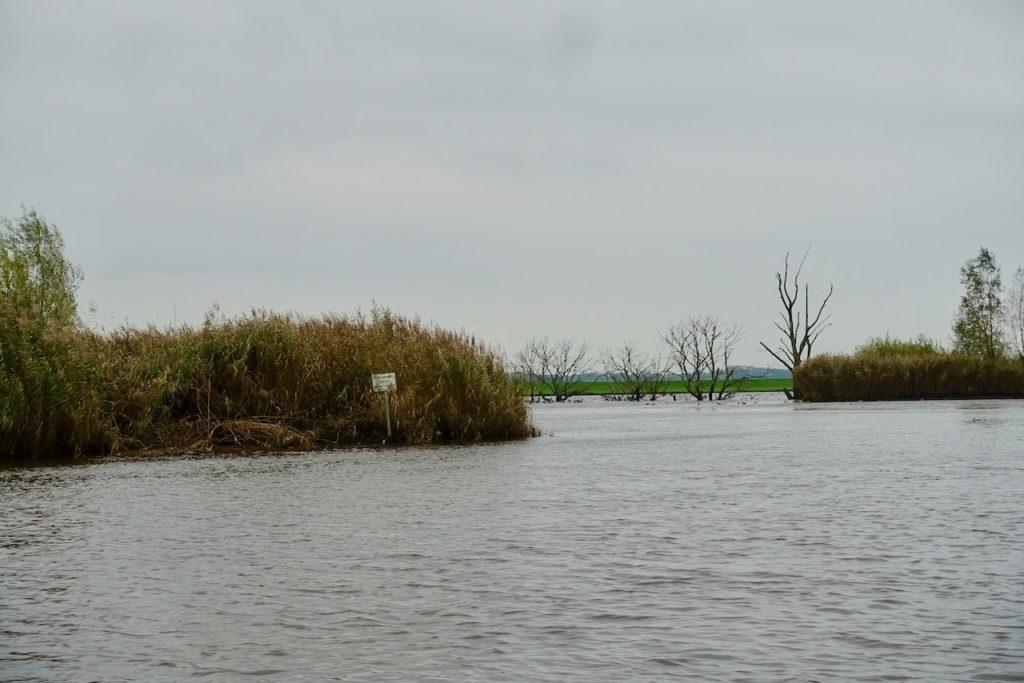 Auf Fluss-Safari