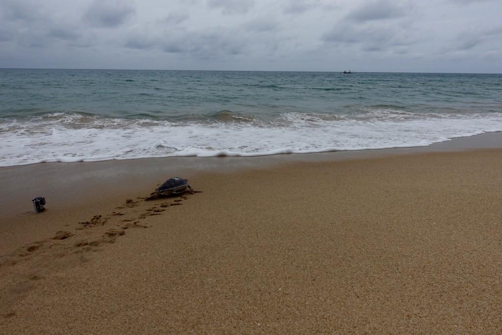 Lucky TJ kämpft sich ins Wasser