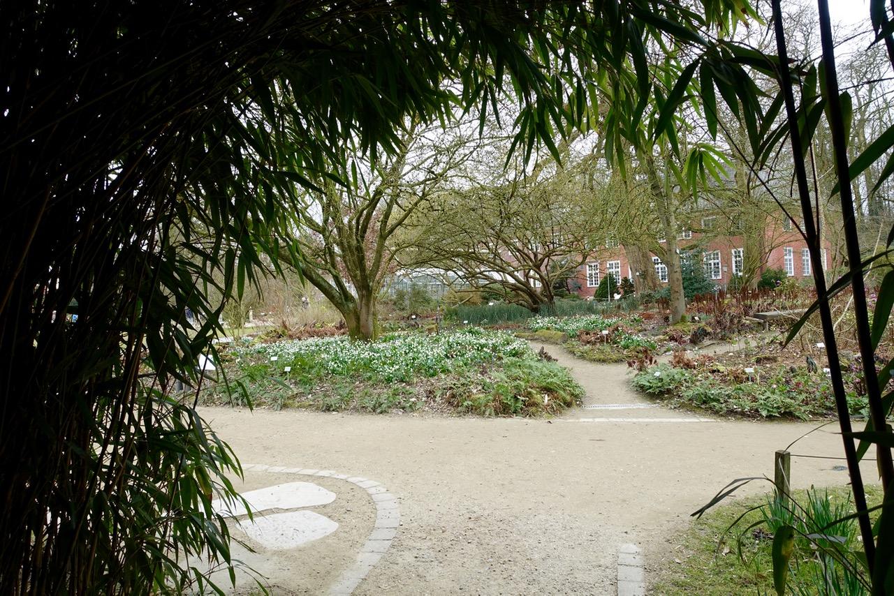Streifzug durch den Botanischen Garten Münster