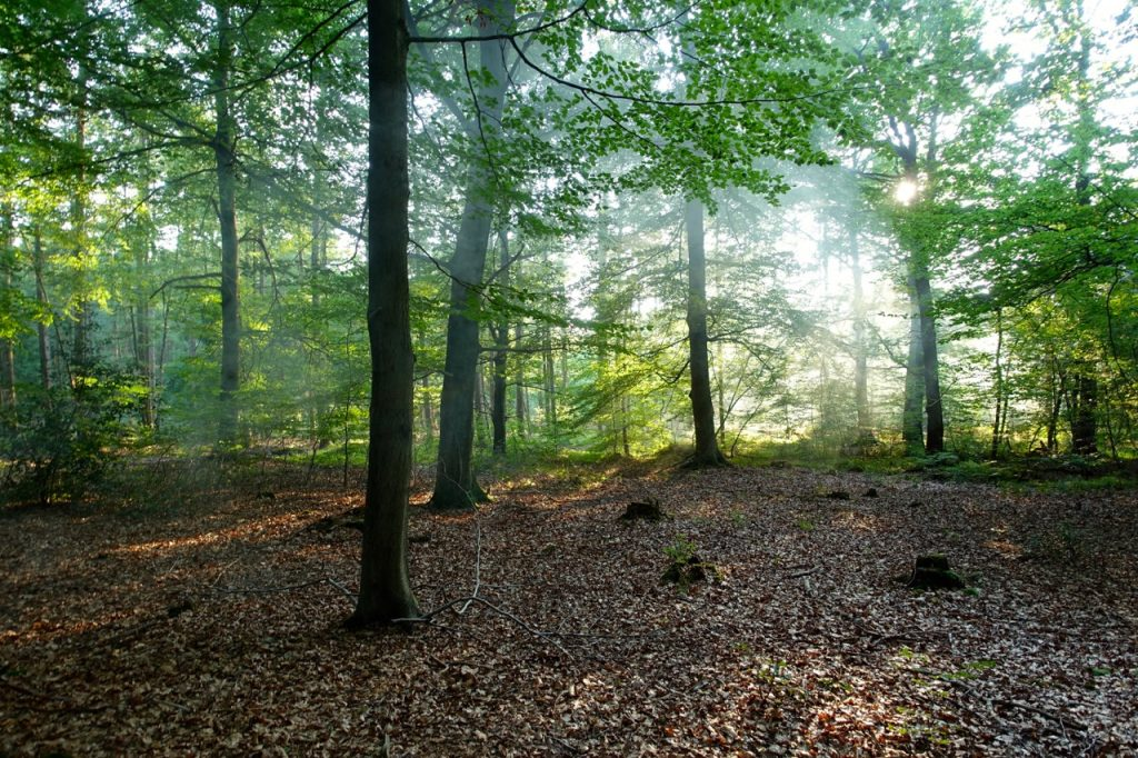 Im Wald zur Ruhe kommen