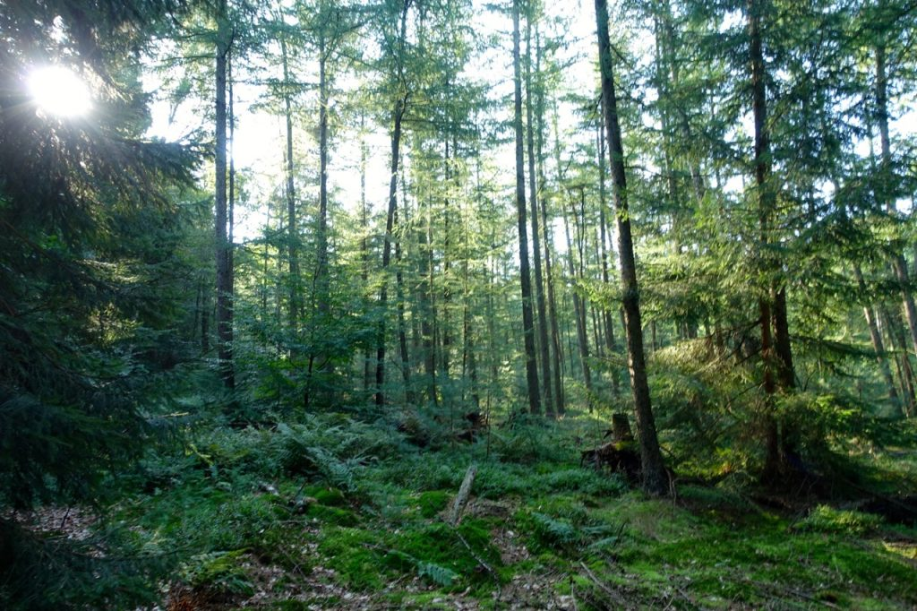 Waldbaden - meine Eindrücke