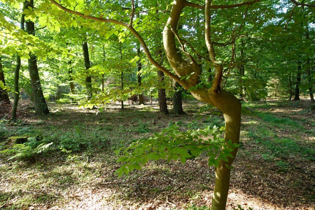 Hier ensteht eine Baumfreundschaft