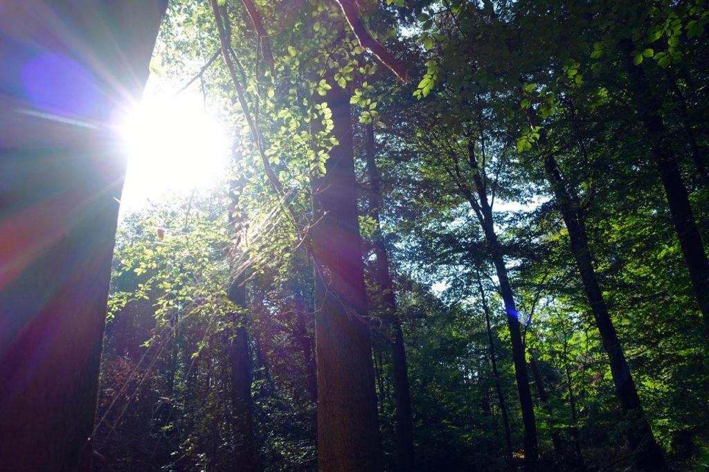 Waldbaden - den Moment genießen