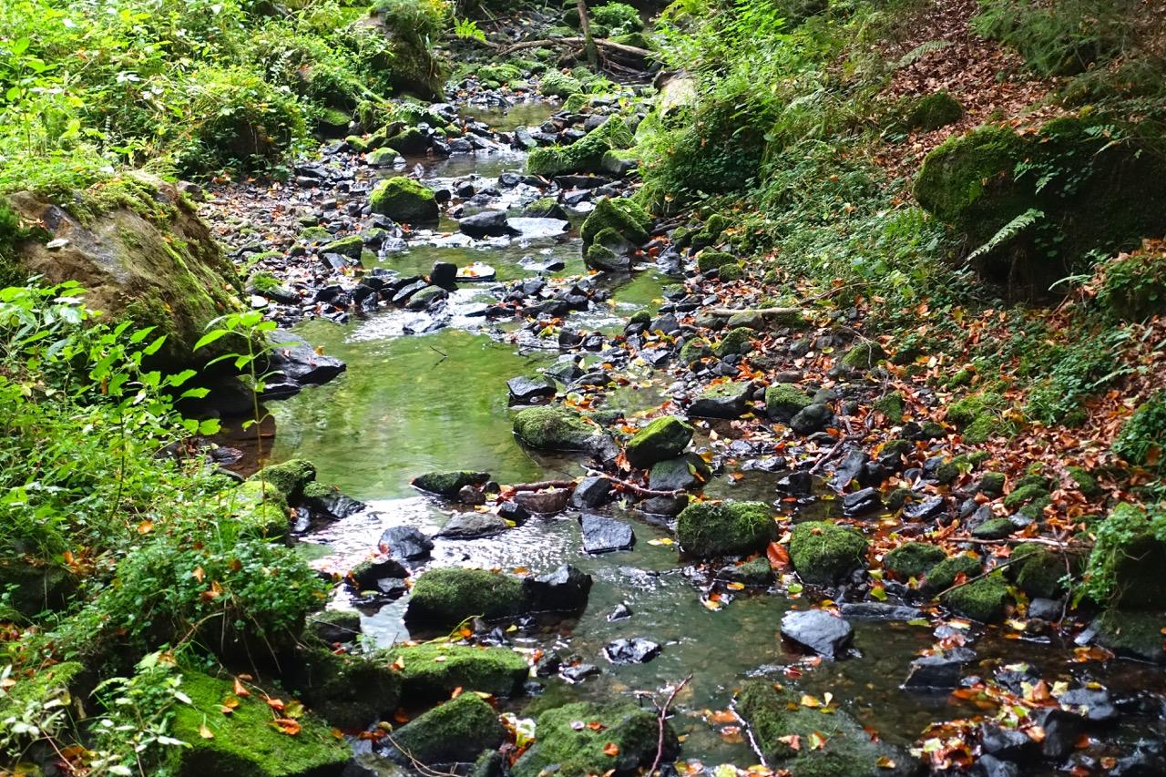Im Silberbachtal – Hermannshöhen wandern
