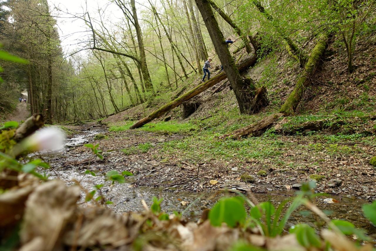 Geierlay Wanderweg – wir folgen dem Bachlauf bis zu einer kleinen Bruecke