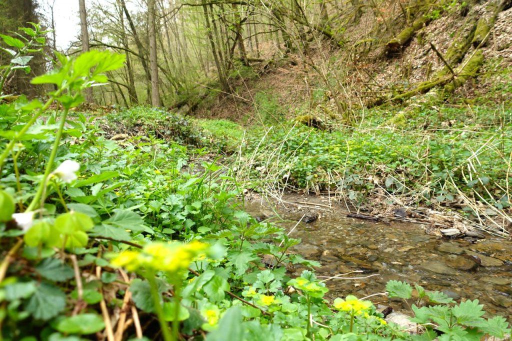 Geierlay Wanderweg - wir folgen dem Bachlauf