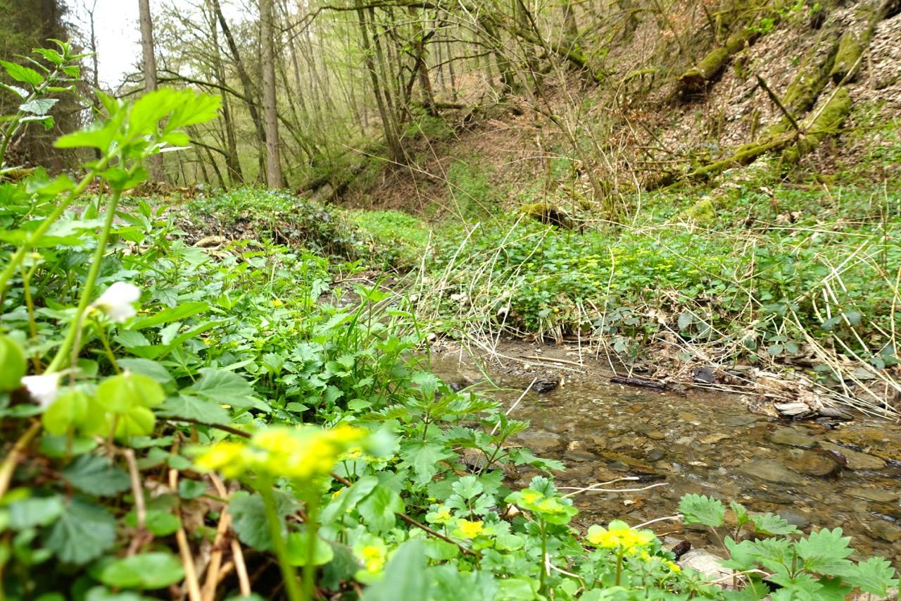 Geierlay Wanderweg – wir folgen dem Bachlauf