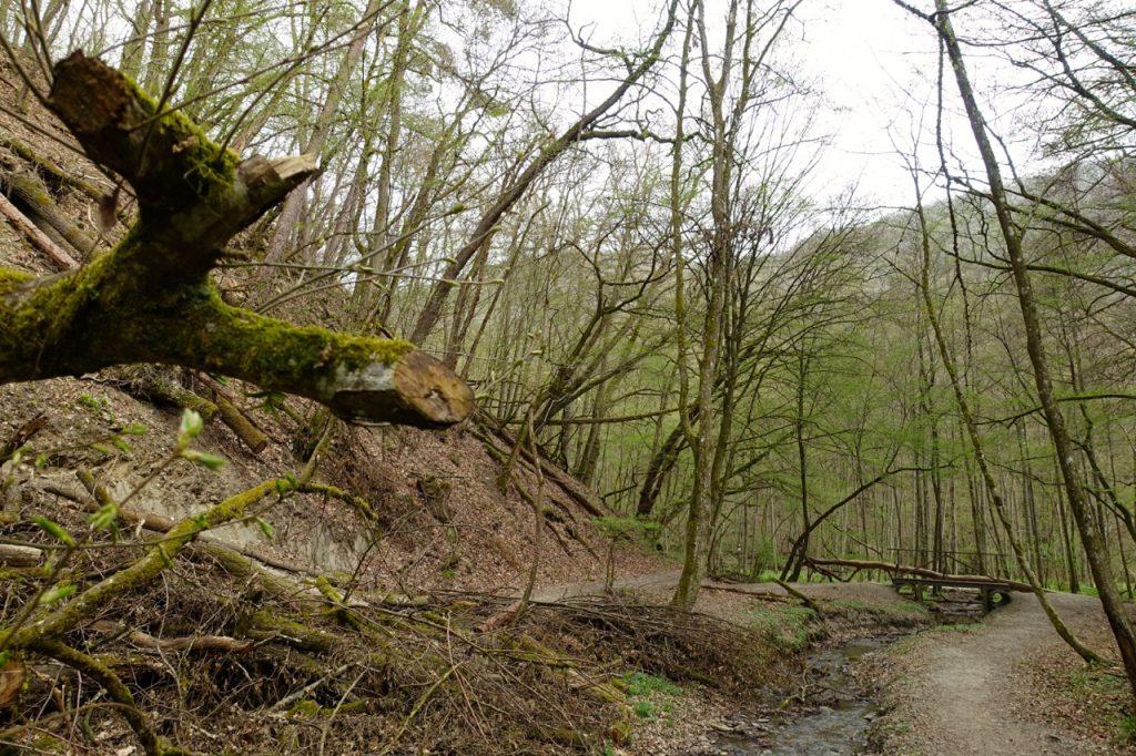 Durch den Wald hinab ins Moersdorfer Bachtal