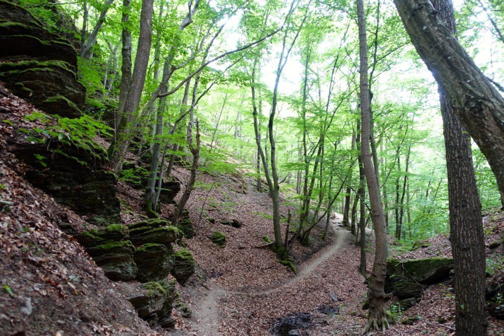 Traumschleife Ehrbachklamm - im Tal