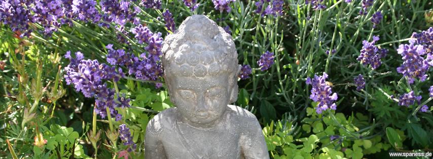 Titelbild für Facebook-Fanpage: Entspannung im Lavendel (für die richtige Bild-Größe, einfach das Bild anklicken)