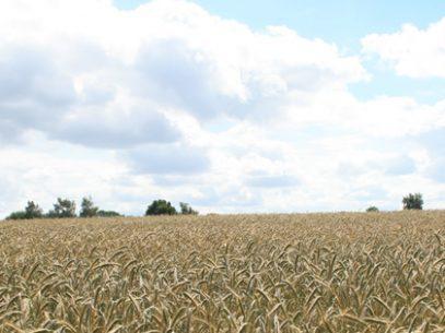 Titelbild für Facebook-Fanpage: Sommer über dem Kornfeld (für die richtige Bild-Größe, einfach das Bild anklicken)