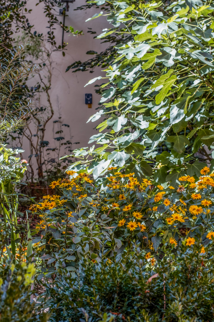 Herzfleck Garten - Sophia www.weltnah-magazin.de