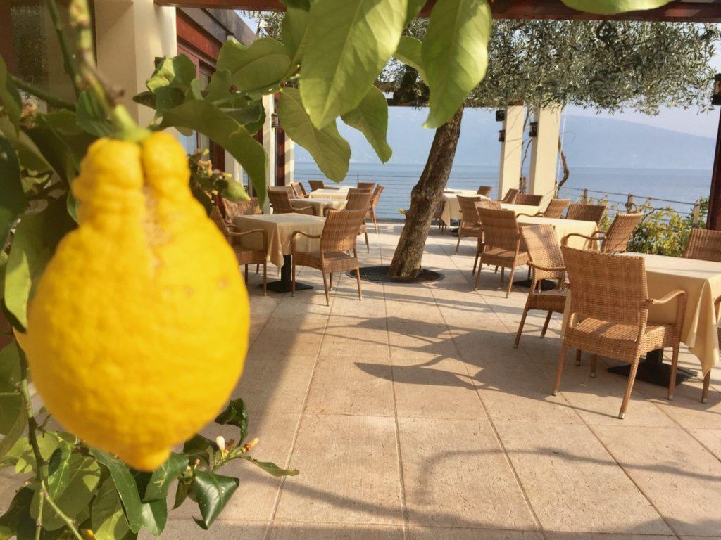 Zitronen im April in Gargnanao Gardasee