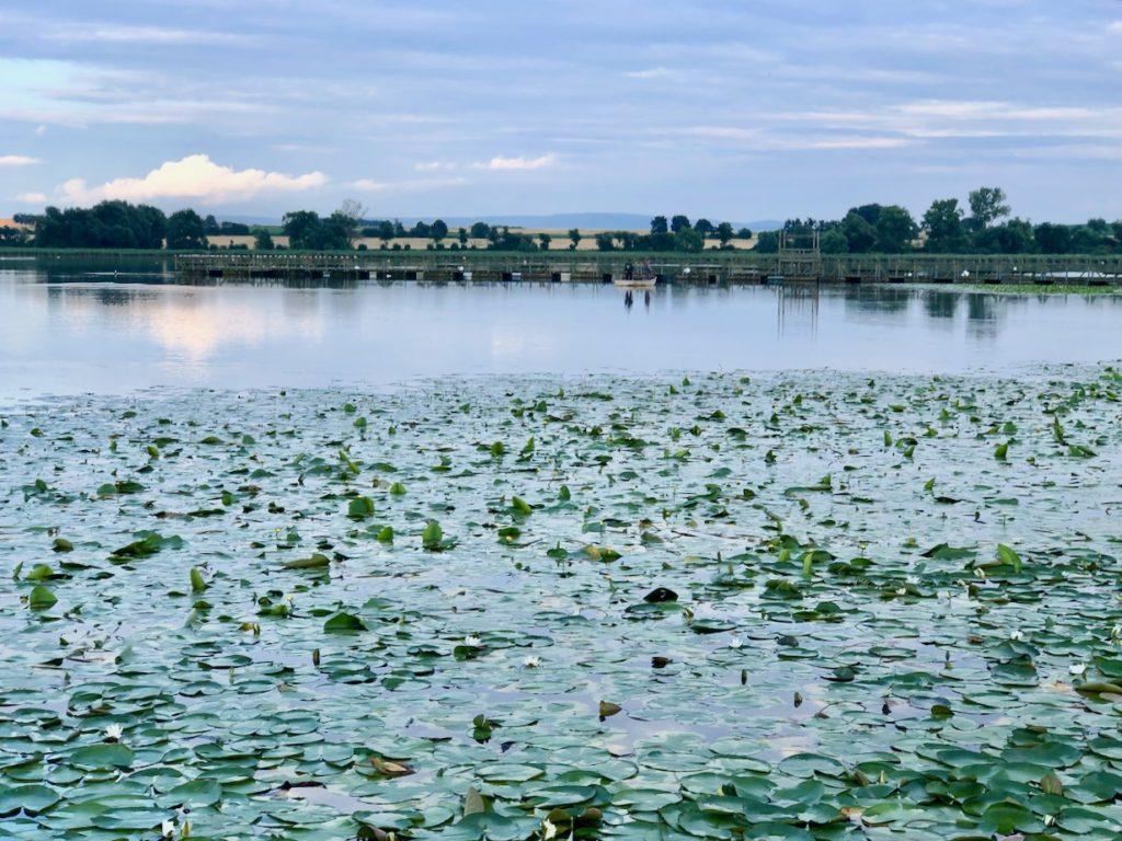 Auch im Seeburger See befindet sich ein Naturschwimmbad