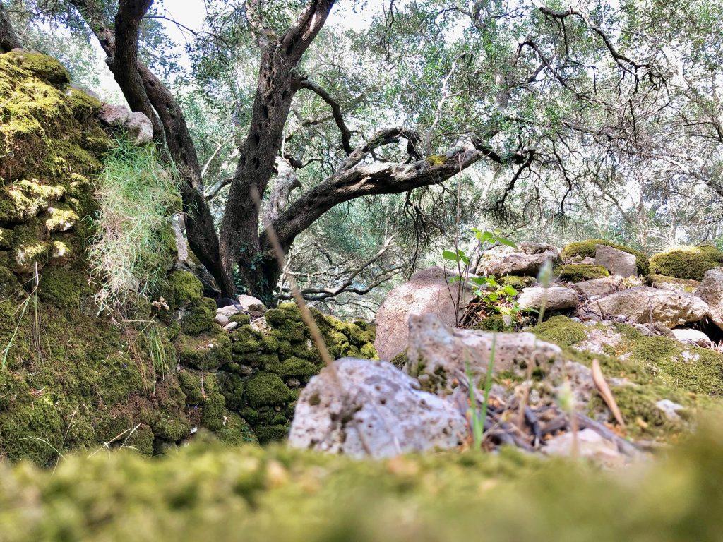 Unterwegs auf dem corfu Trail auf Korfu