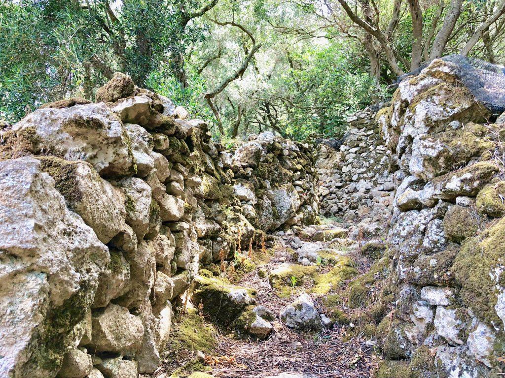 Corfu Trail Bilder durch Olivenhaine