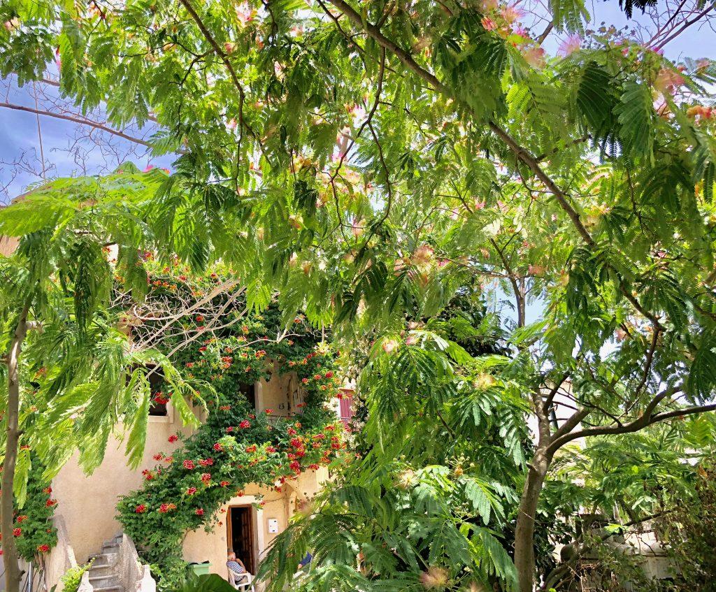 Wanderbericht Korfu Trail