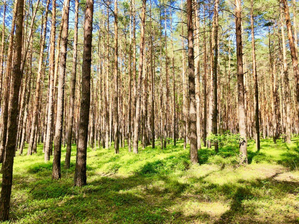Unterwegs im Wald von Finsterwalde Elbe Elster Land