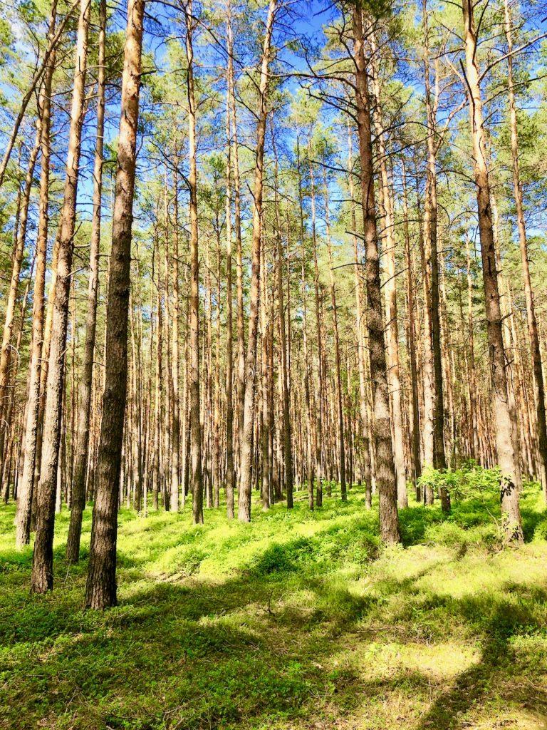 Fahrradtour durch Wald und Wiesen im Elbe-Elster-Land