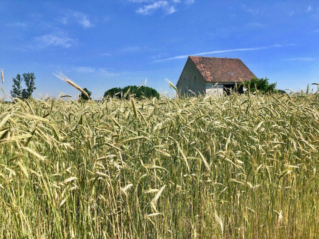 Elbe-Elster-Land: Vorbei an Wiesen und Feldern