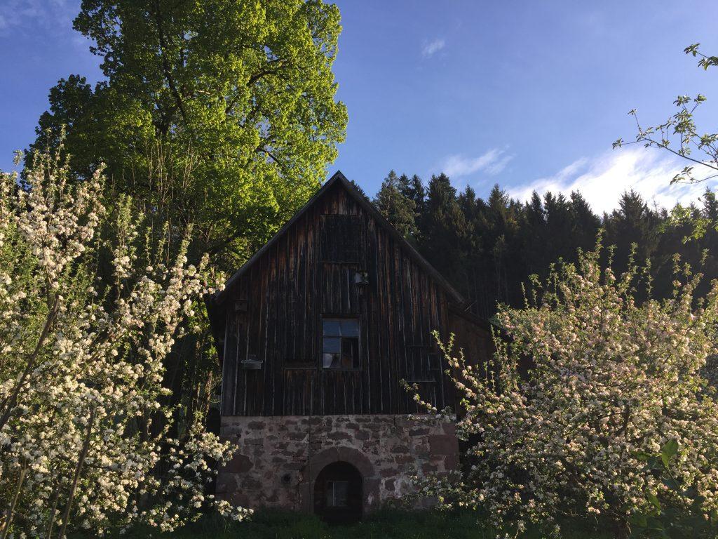 Schwarzwald Idylle pur