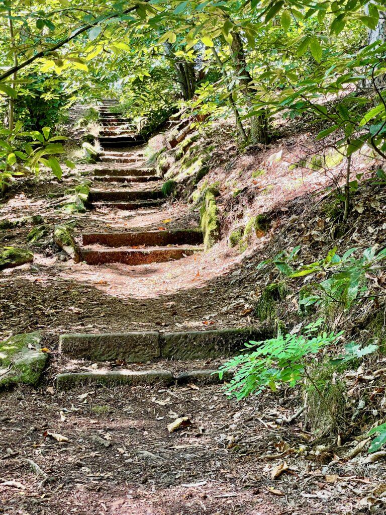 Wandern Pfalz
